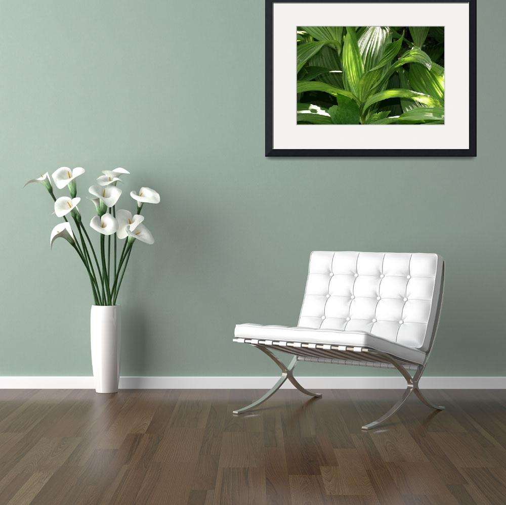 """False hellebore leaves&quot  (2004) by eye4nature"