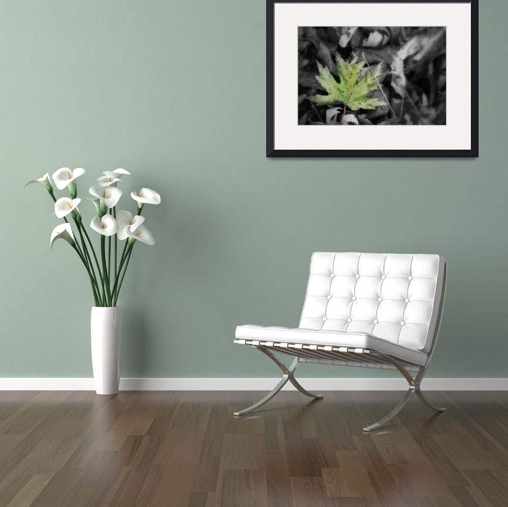 """Single Green leaf with black and white leaves&quot  (2009) by imaginativeimagery"
