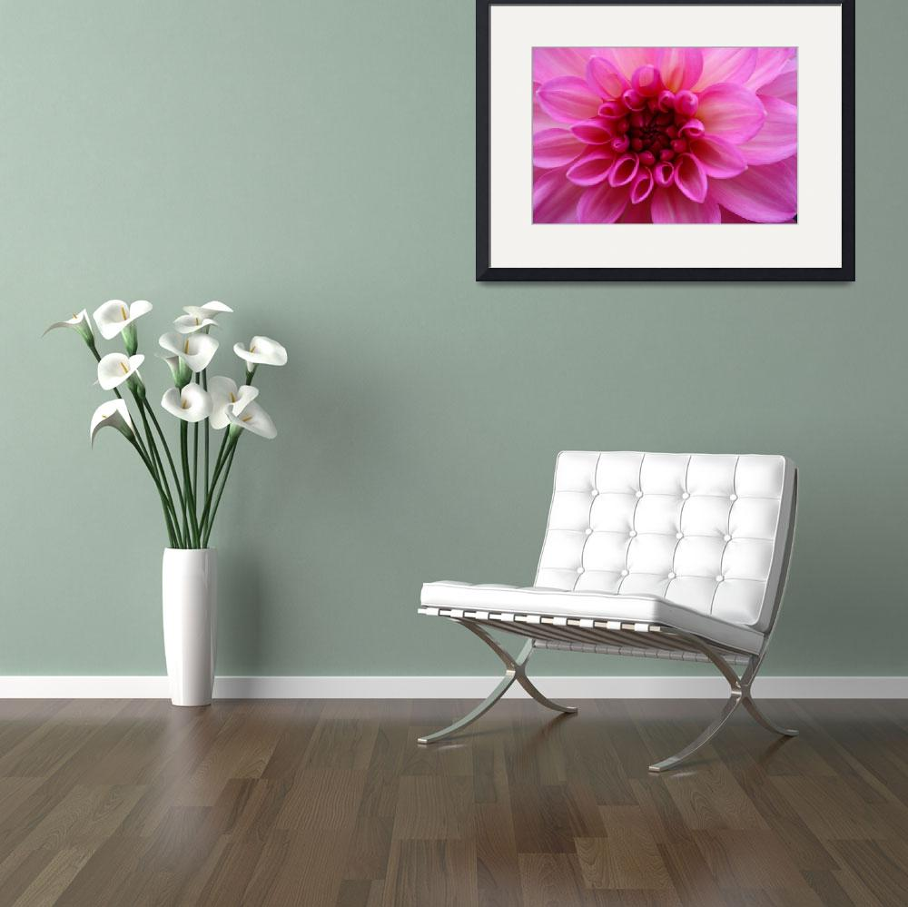 """Rosey Pink Dahlia&quot  by Fantasmagoricalphoto"