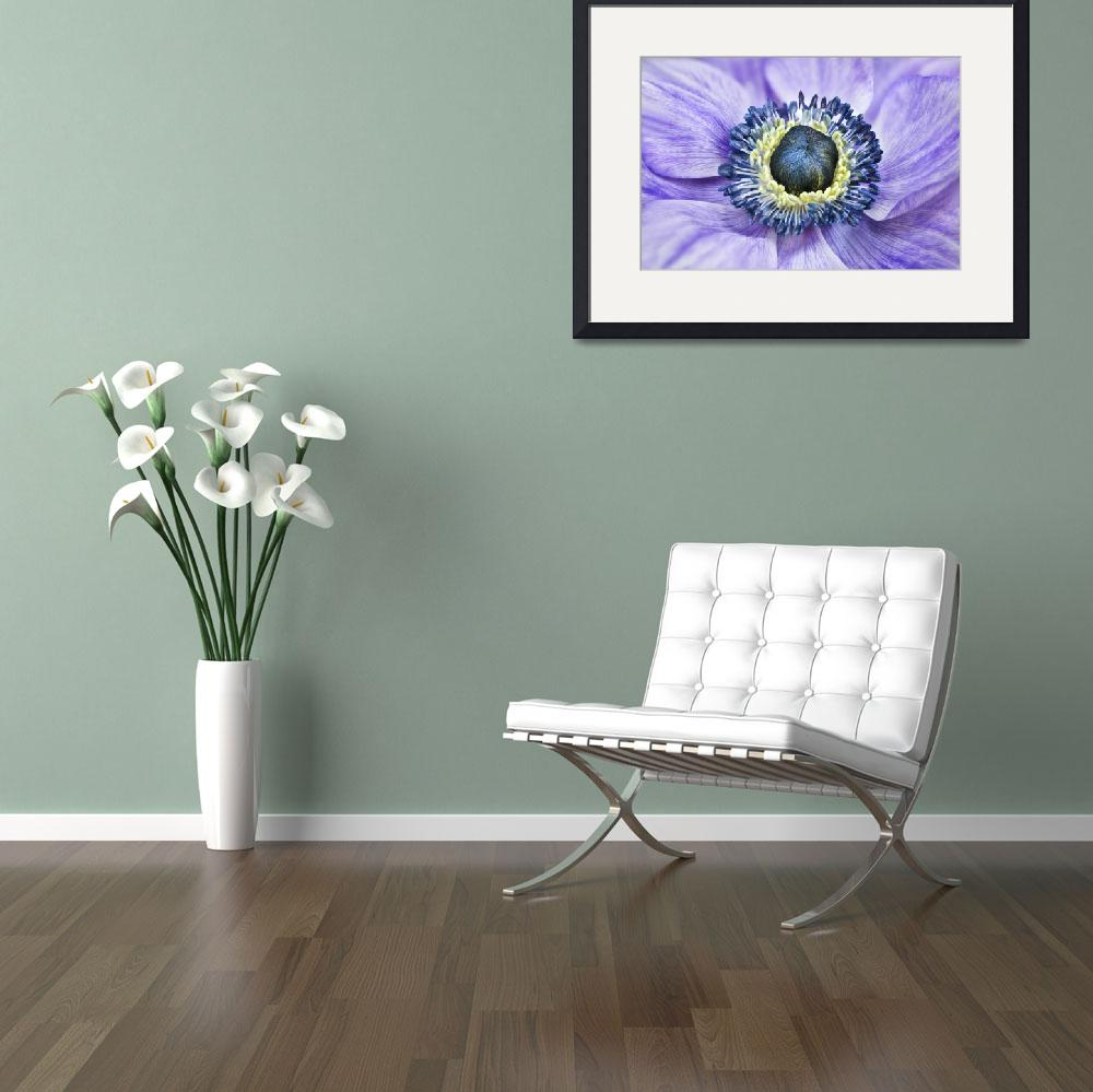 """Purple Anemone_&quot  (2014) by OneliaPGPhotography"