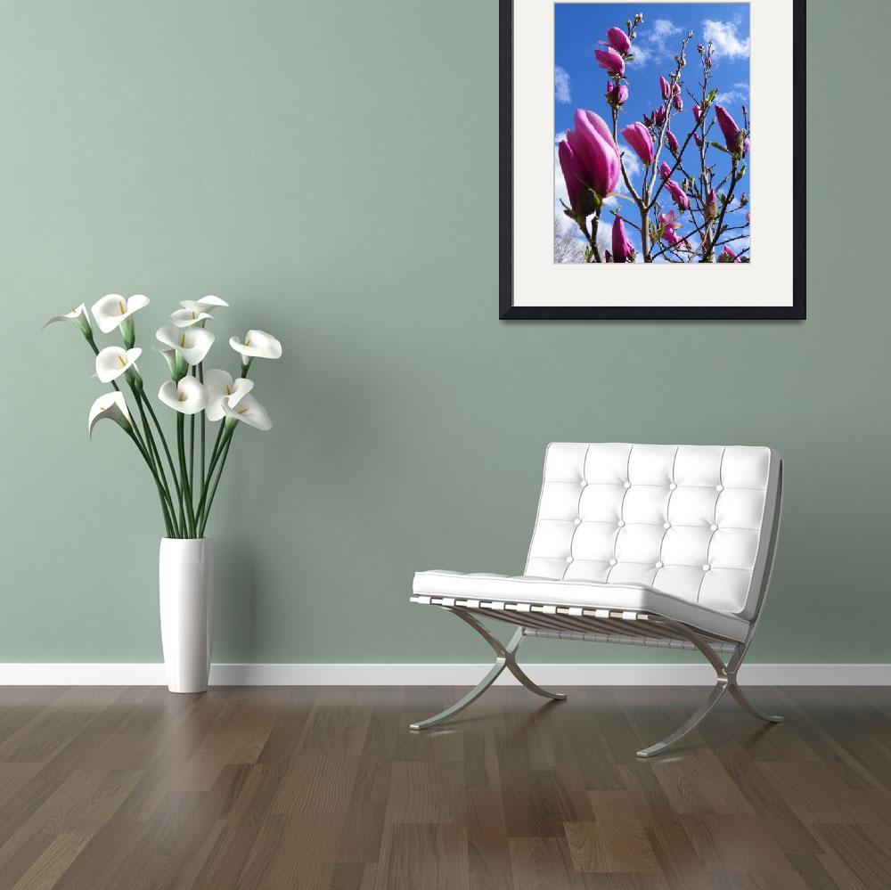 """Botanical - Magnolia Tree Flower - Outdoors Floral&quot  by artsandi"