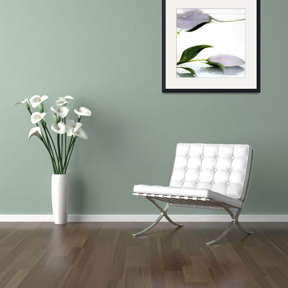 """Lilies One Floating&quot  (1991) by paulasuterphoto"