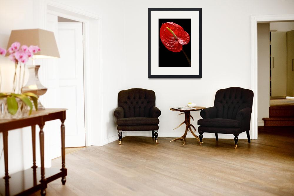 """Fiery Red Anthurium. by terencedavis floralart&quot  (2011) by terencedavis"