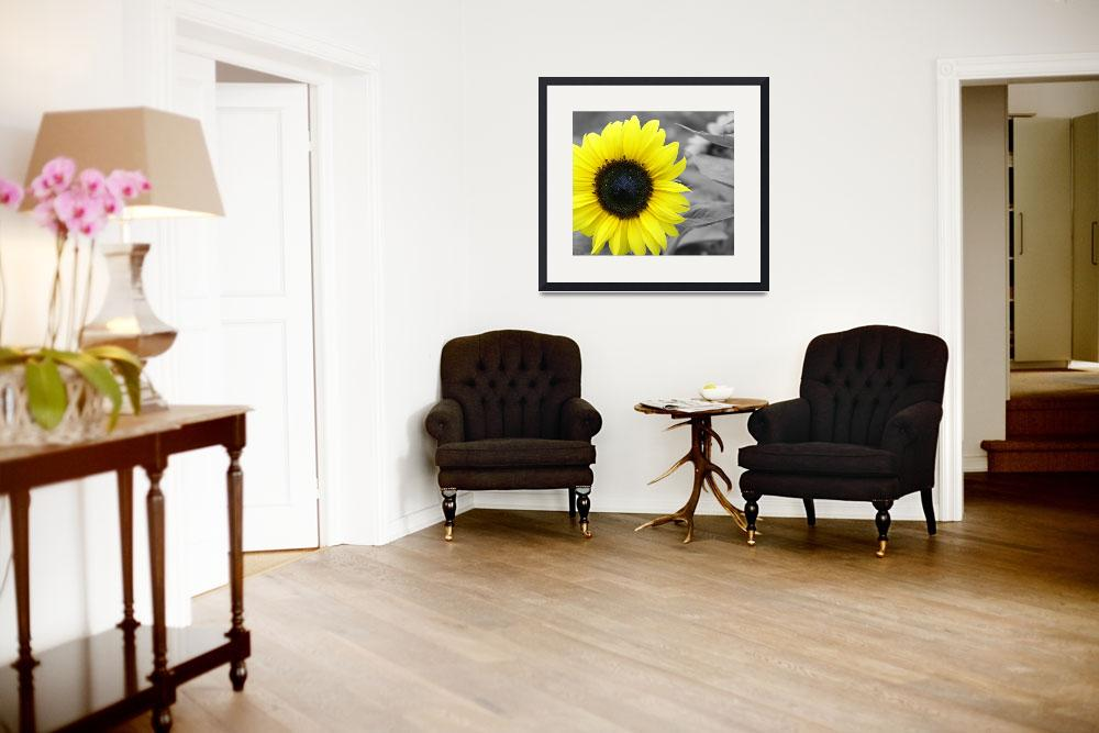 """Sunflower&quot  (2008) by LHPhotography"