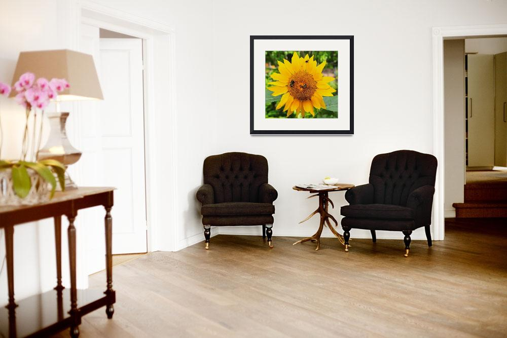"""Sunflower and Bee&quot  (2008) by RobertDonovan"