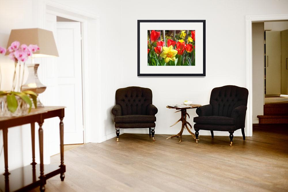 """Spring Daffodils Flowers Garden Red Tulips&quot  (2014) by BasleeTroutman"
