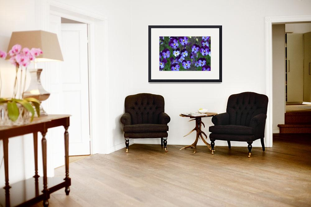 """Purple violas&quot  (2008) by ebriscoe"