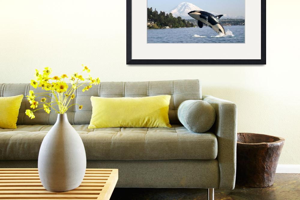 """LOST ORCA WHALE IN LAKE WASHINGTON SEAFAIR BLUE AN&quot  (2008) by teofaith"