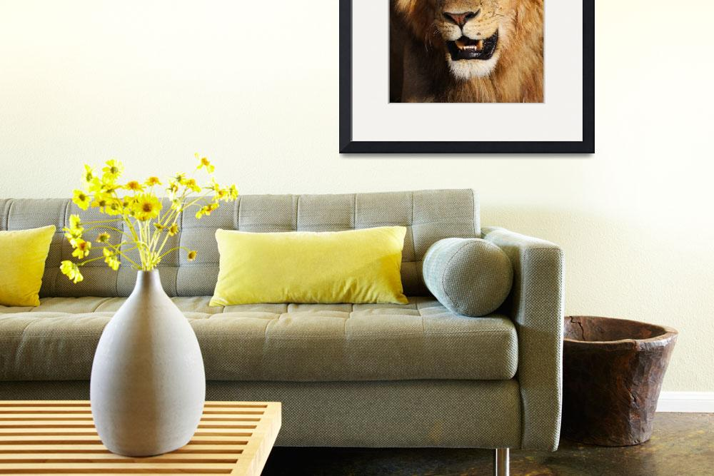 """Masai Mara Lion&quot  (2009) by gc-photography"