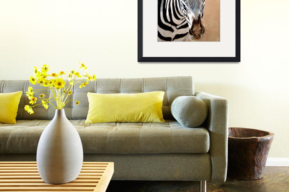"""Serengeti Zebra&quot  (2008) by CarolMcCarty"