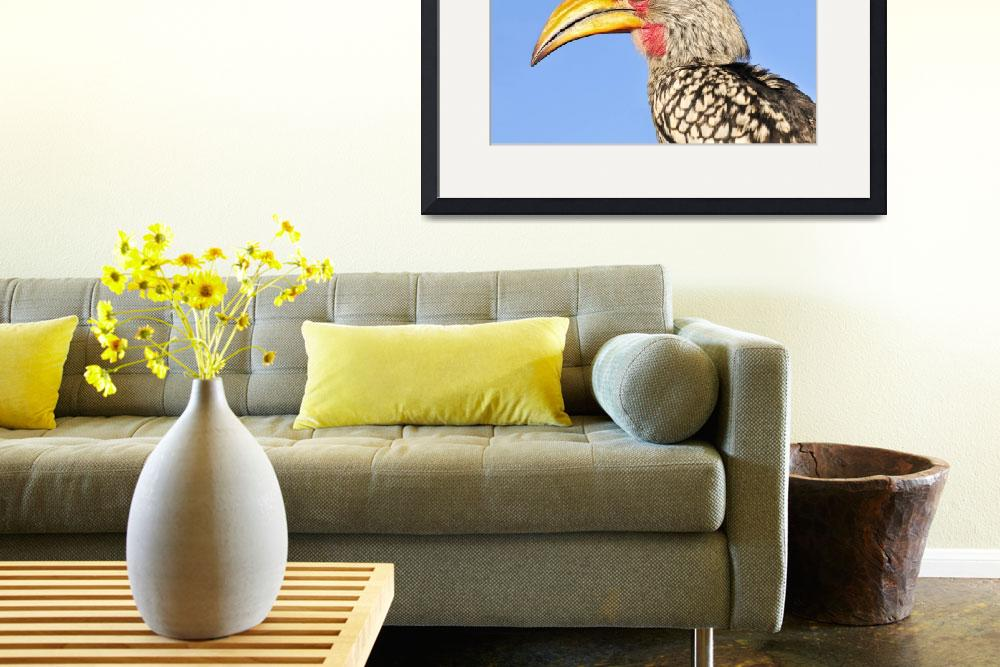 """WCC_1900- Yellow-billed Hornbill Portrait&quot  (2015) by photocell"