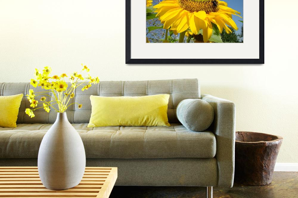 """SUN FLOWER Summer Garden 9 Sunlit Sunflower Prints&quot  (2009) by BasleeTroutman"