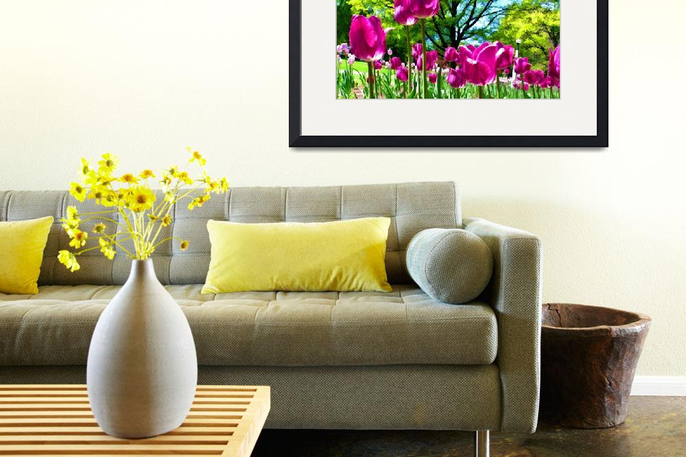 """Luminous Purple Tulip Blooms in Spring Flower Bed&quot  by Chantal"