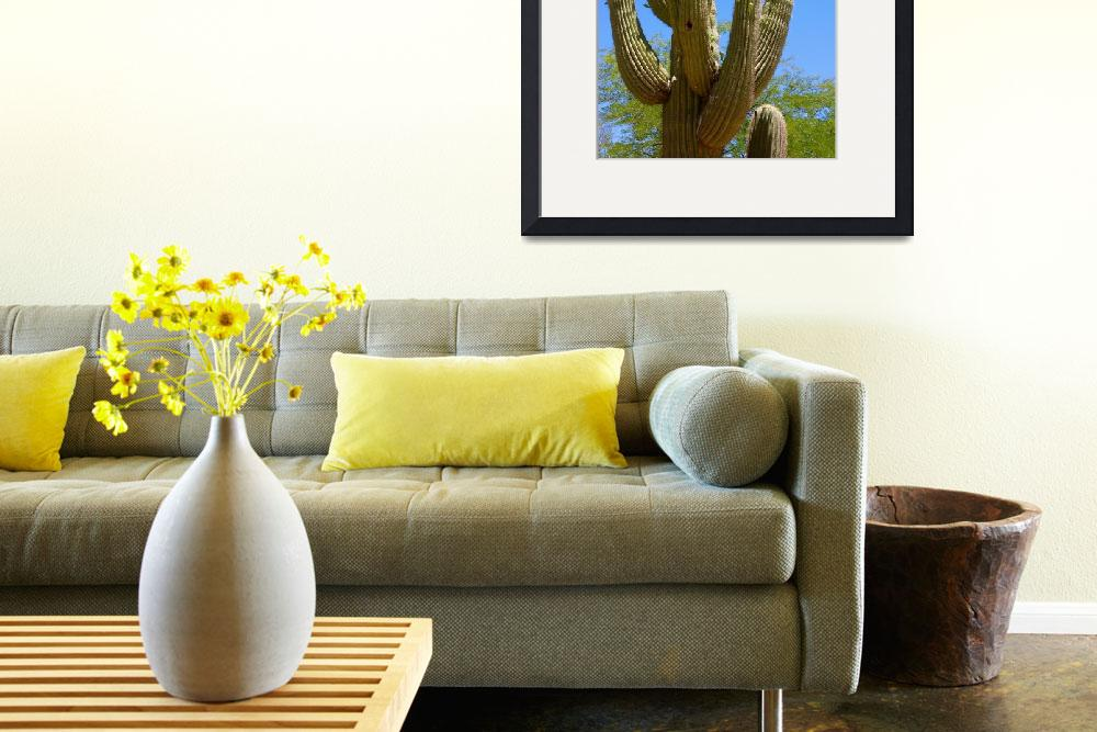 """Bird on Blooming Saguaro Cactus&quot  by Groecar"