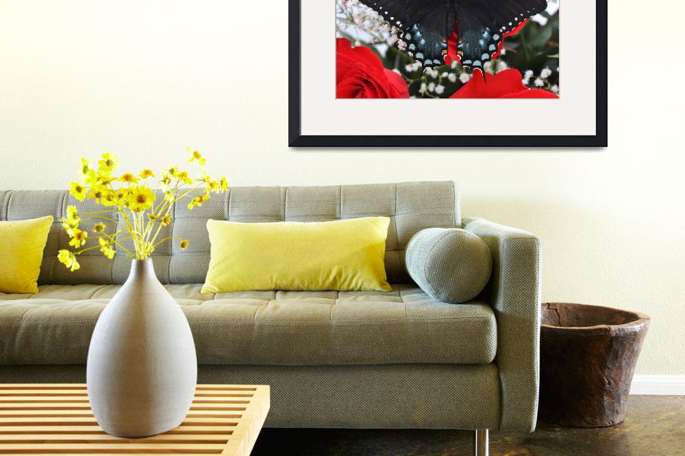 """Spicebush Swallowtail Butterfly - Valentine&quot  (2011) by evansonart"