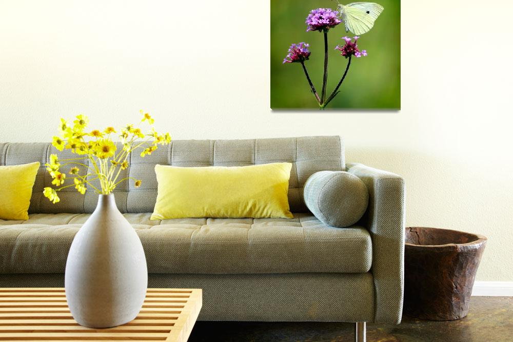 """Cabbage White Butterfly Square 2014&quot  (2014) by KsWorldArt"