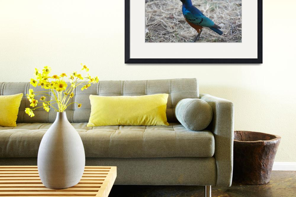 """Superb Starling 2&quot  by allen"