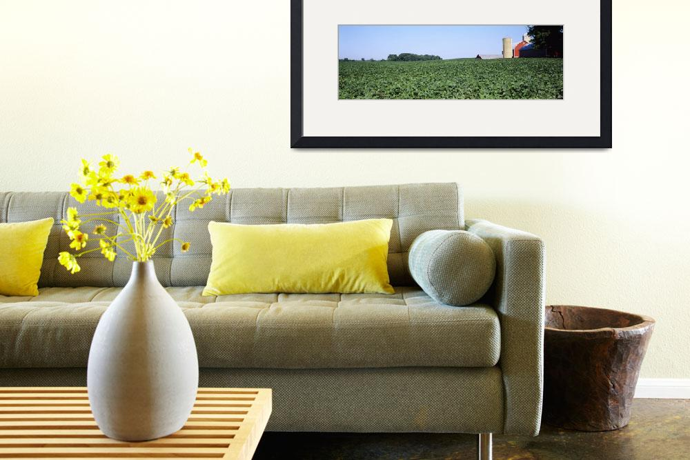 """Soybean field with a barn in the background&quot  by Panoramic_Images"