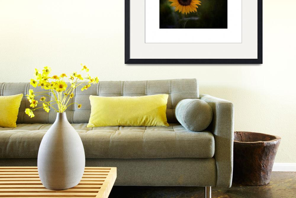 """Sunflower&quot  (2012) by mccarnphoto"