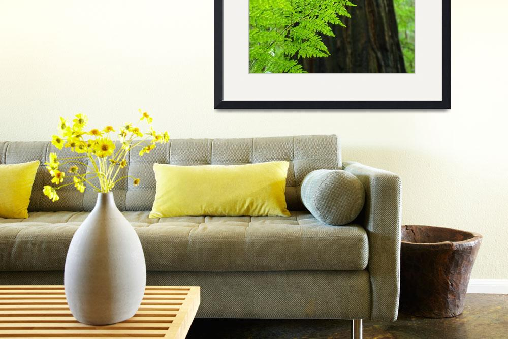 """FERN Art Print Sunlit Redwood Forest Ferns Baslee&quot  (2009) by BasleeTroutman"