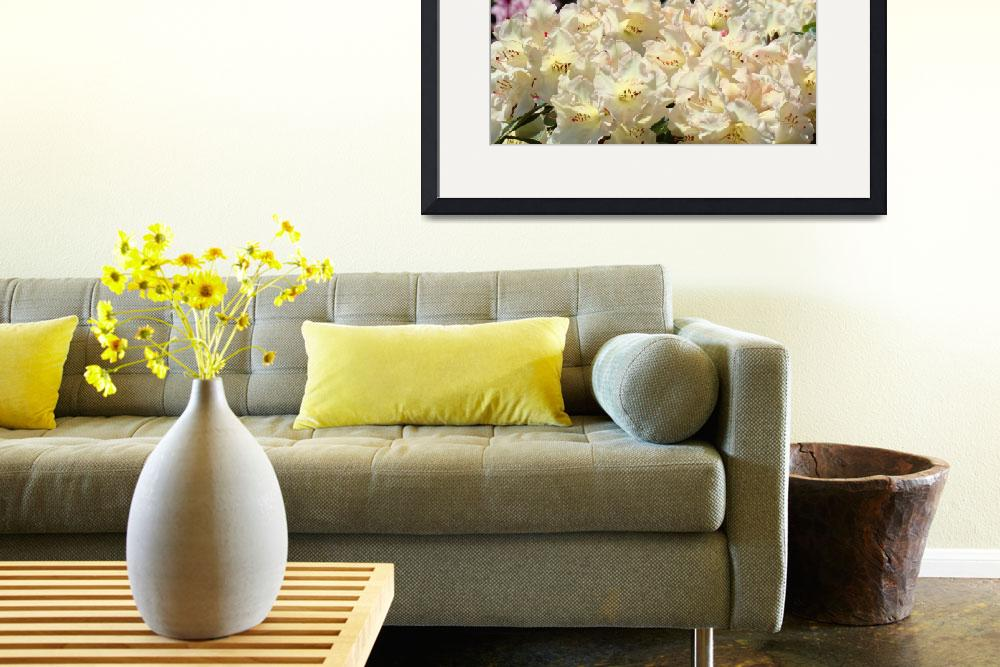"""Rhododendron Flowers Garden art Prints Yellow&quot  (2010) by BasleeTroutman"