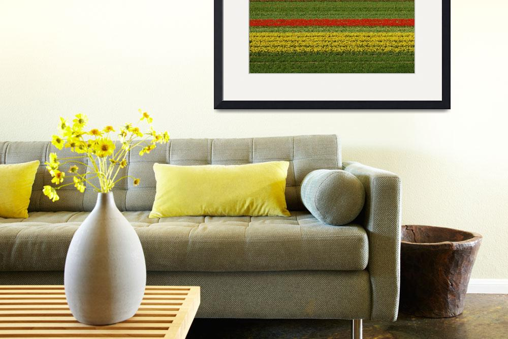 """Tulip Field - Straight tulip lines in tulip field&quot  (2009) by vision"
