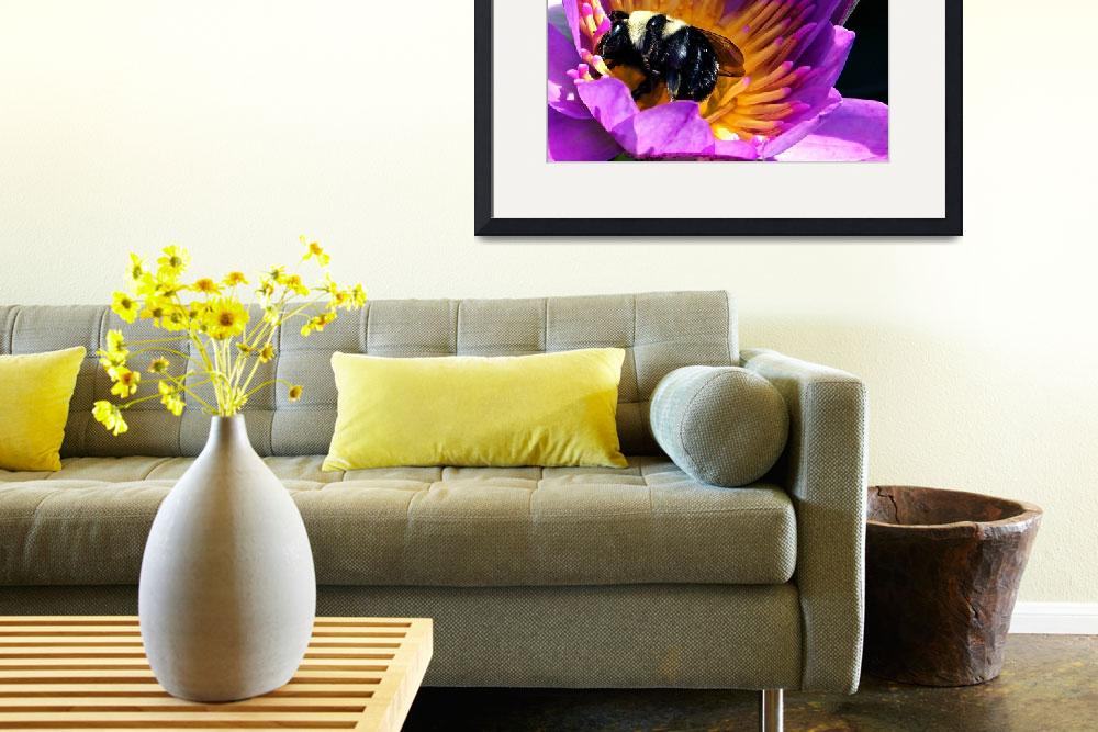 """438477195_bee in waterlily&quot  by NaturalPhotoz"