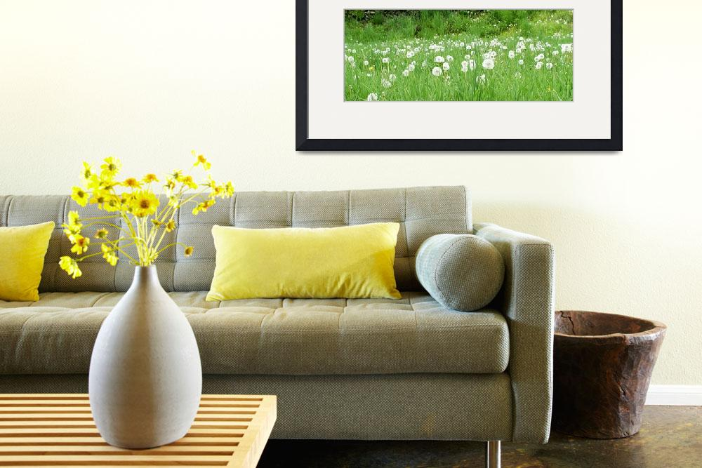 """Dandelion  Meadow 10b&quot  (2011) by Ricardos"