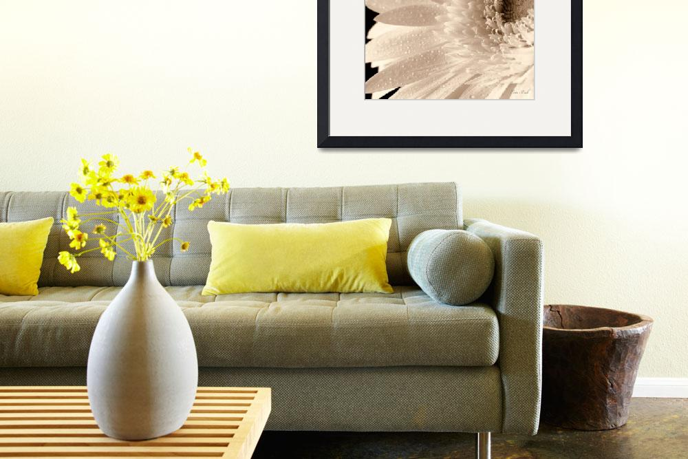 """White Gerbera Sepia&quot  (2009) by cate"