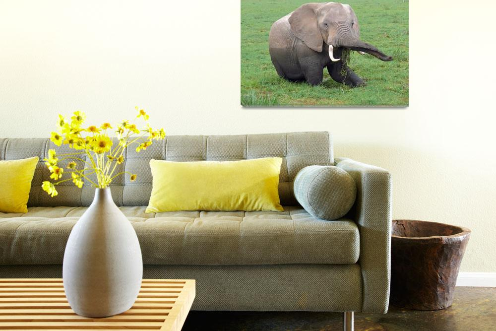 """Elephant Snack&quot  (2007) by stockphotos"