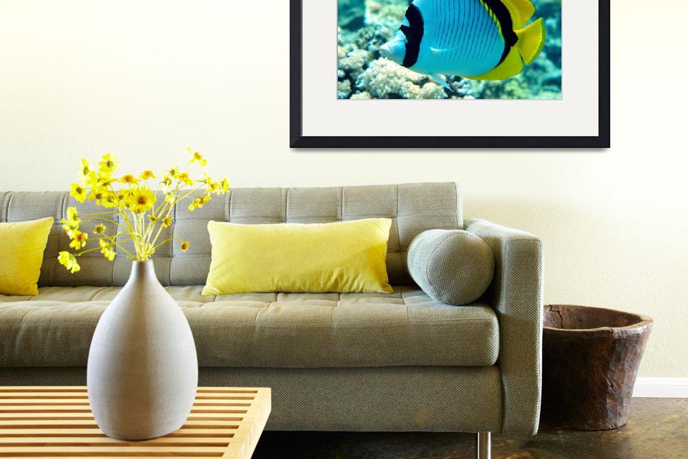"""R S Butterflyfish&quot  (2004) by JoaoPonces"
