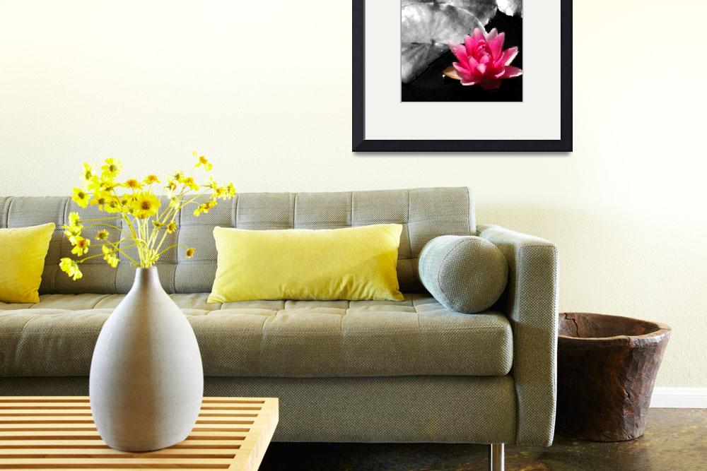 """Pink Waterlily on Black and White Background&quot  (2010) by meaganjdesign"