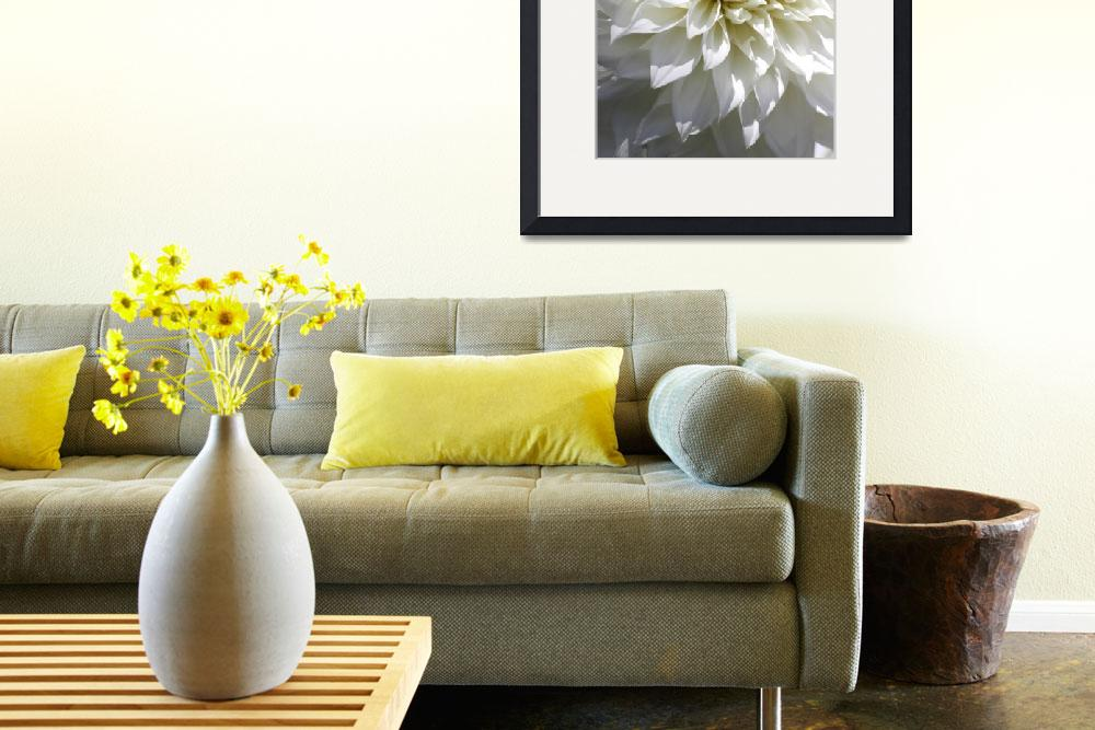 """Gorgeous glowing White Dahlia_9862&quot  (2010) by SBCountyImages"