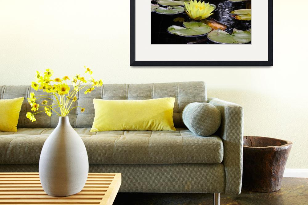 """Yellow Water Lily 2&quot  (2012) by ShaneWells"