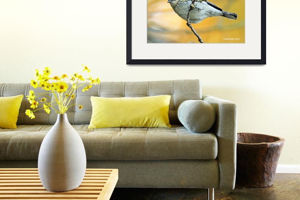"""Yellow-Rumped Warbler (Dendroica coronata)&quot  (2012) by shelshots"