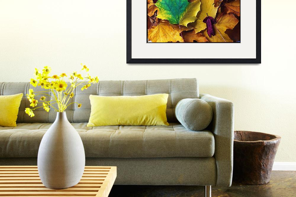 """Autumn Leaves Illustration&quot  (2009) by BotanicaPhotographicus"
