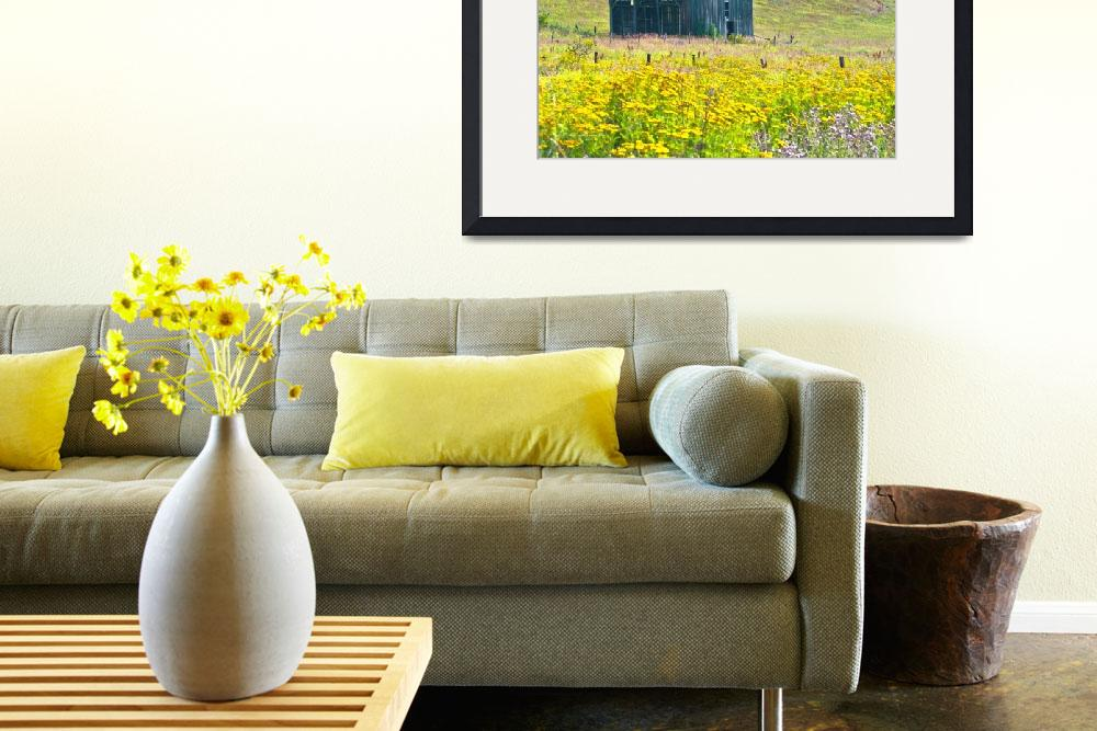 """Barn with Yellow Common Tansy Flowers&quot  (2010) by SamSherman"