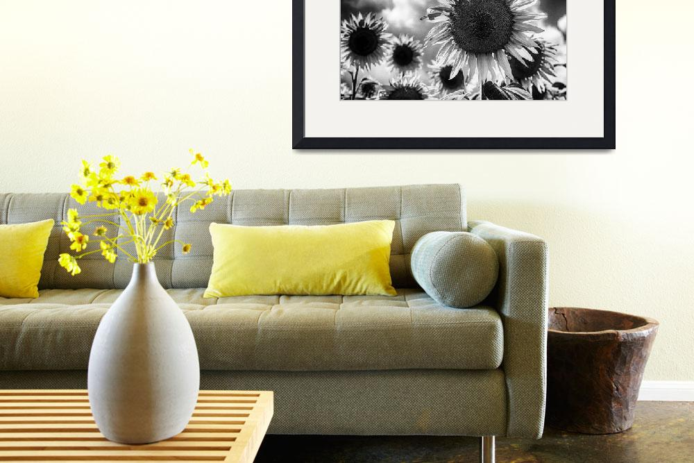 """Black and white sunflowers&quot  (2011) by motleymenagerie"
