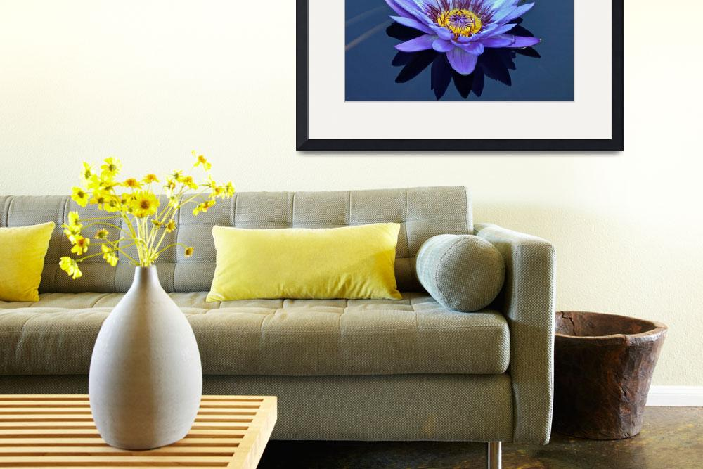 """Single Lavender Water Lily&quot  (2013) by LightHeart"