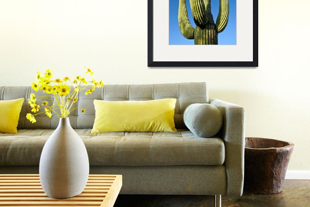 """Saguaro&quot  (2008) by PaulCoco"