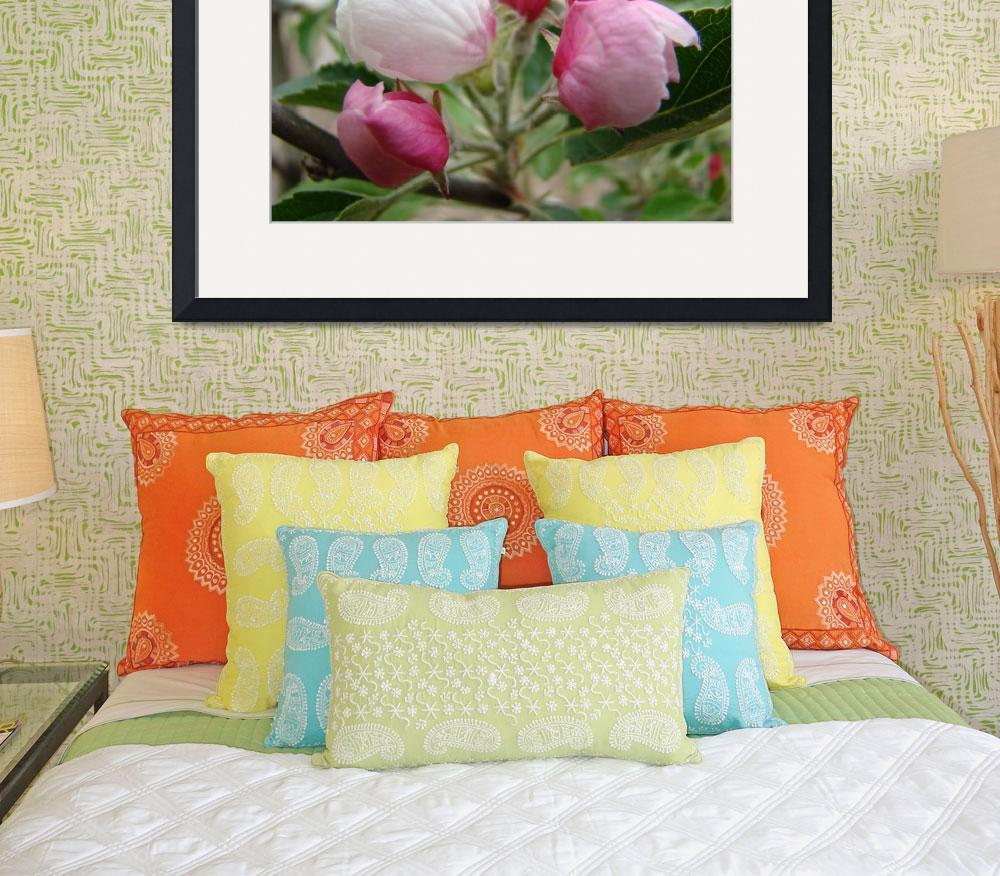 """APPLE BLOSSOMS BUDS Art Print Pink Blossoms Cards&quot  (2009) by BasleeTroutman"