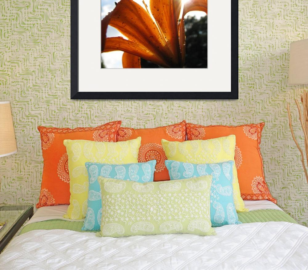 """Close Up Orange Lily In Sunlight&quot  (2008) by visuality"