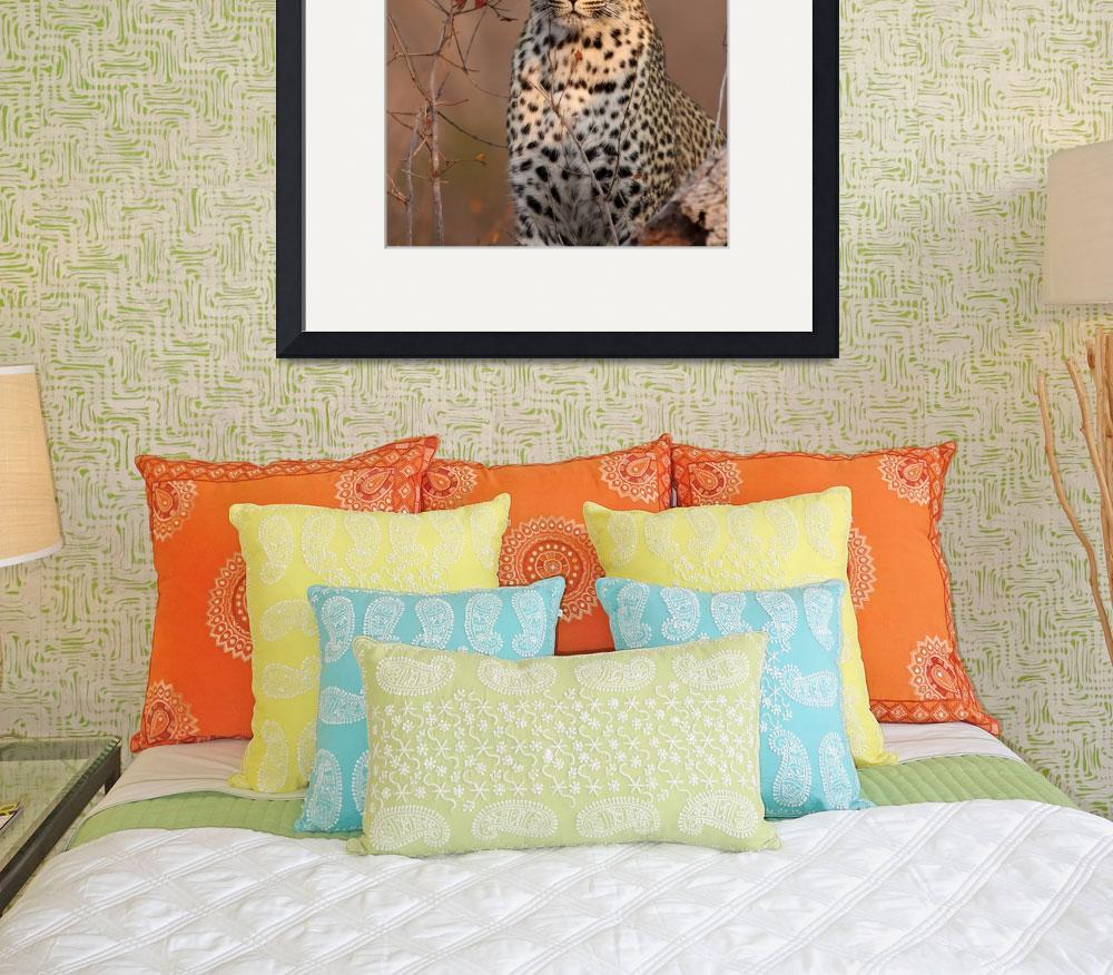 """Female Leopard&quot  (2008) by malcolmbowling"