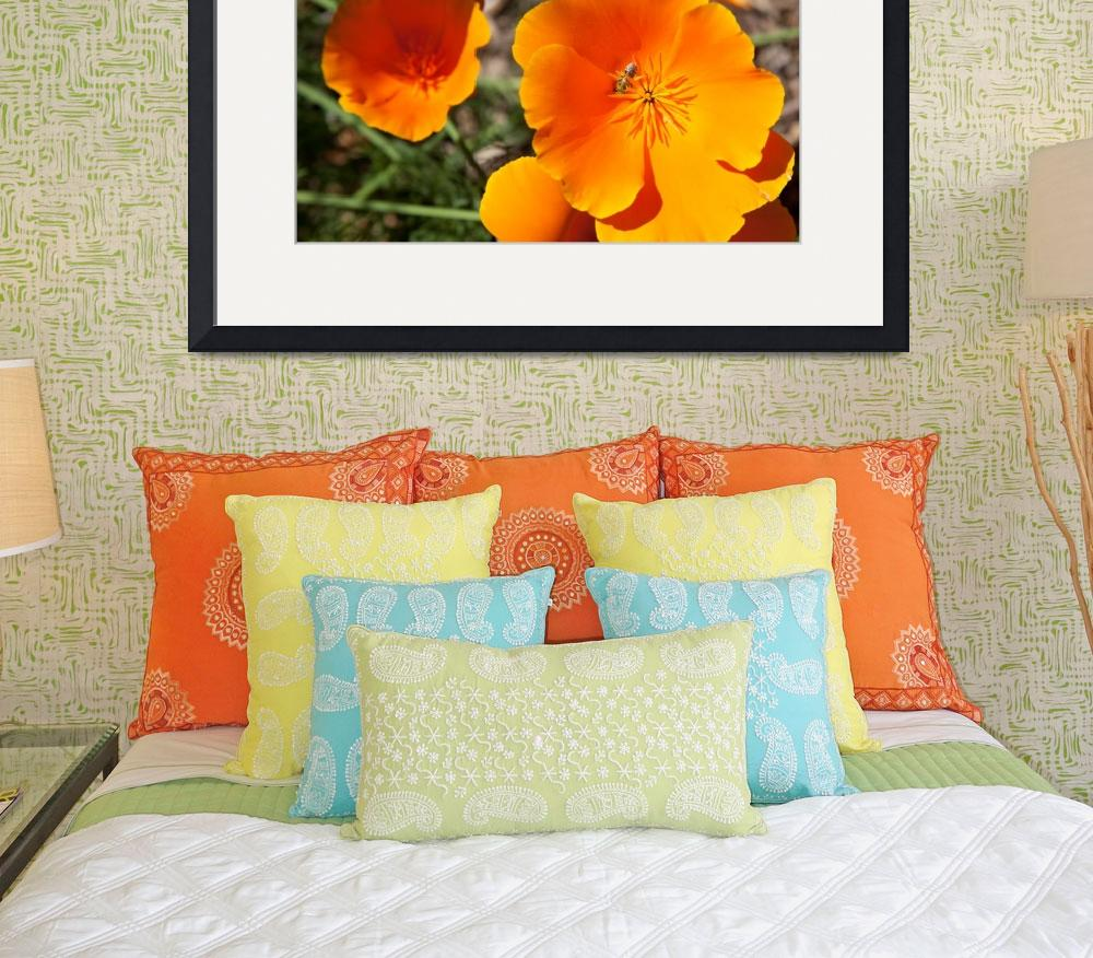 """California Poppy&quot  by midcenturymodern"