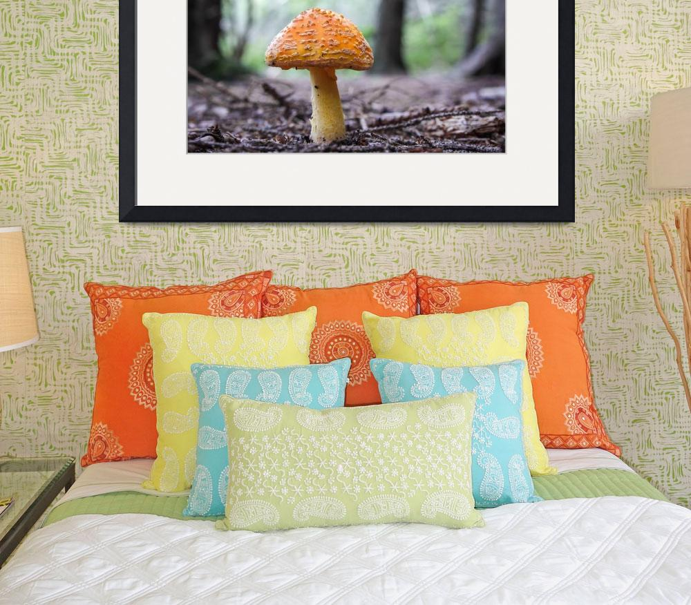 """Yellow Patches (Amanita flavoconia)&quot  (2012) by mfortune"