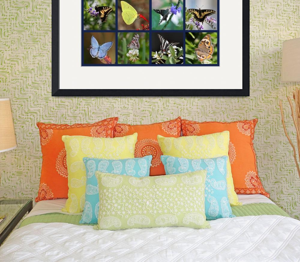 """Butterfly Squares Collage&quot  by Groecar"