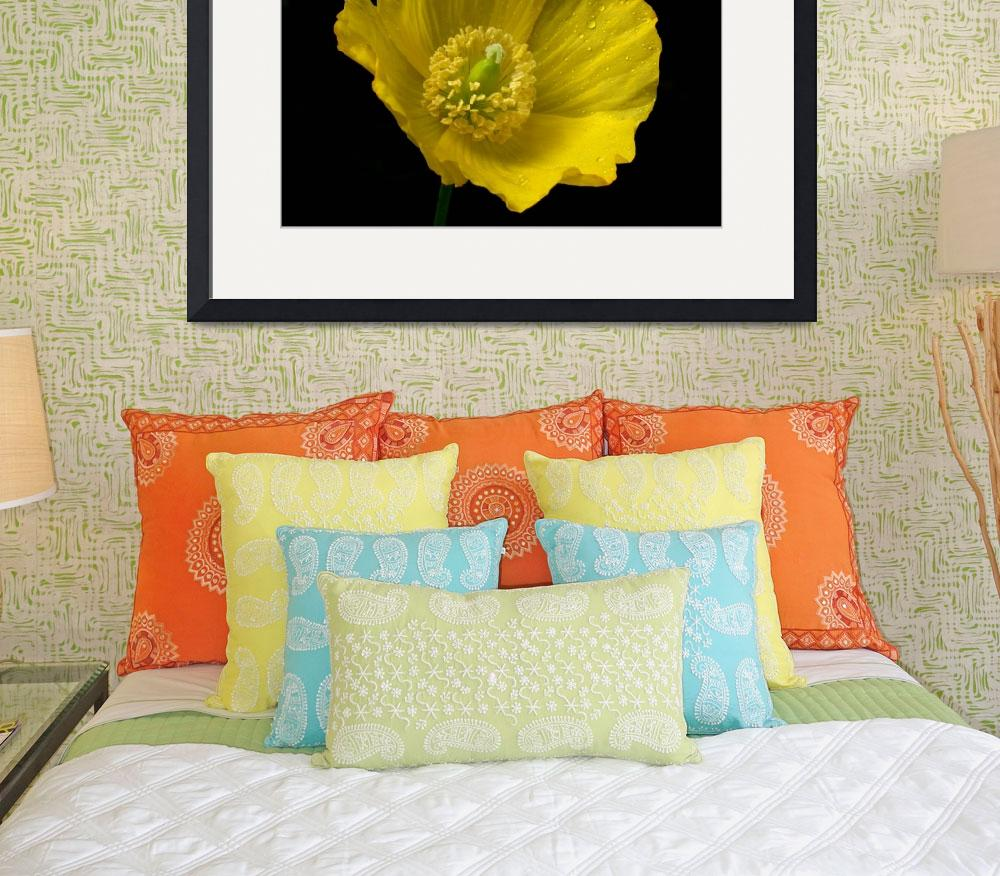 """Welsh Poppy&quot  (2008) by roger"