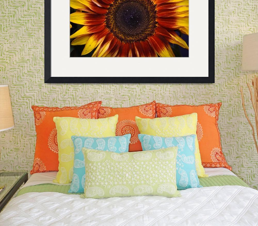 """Dazzling Sunflower&quot  (2012) by julieandel"