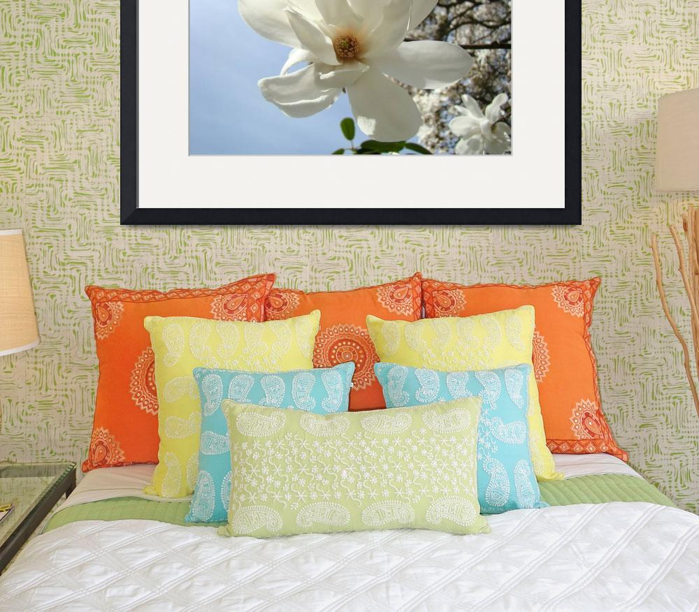 """Spring White Magnolia Flower Art Blue Sky Art&quot  (2009) by BasleeTroutman"