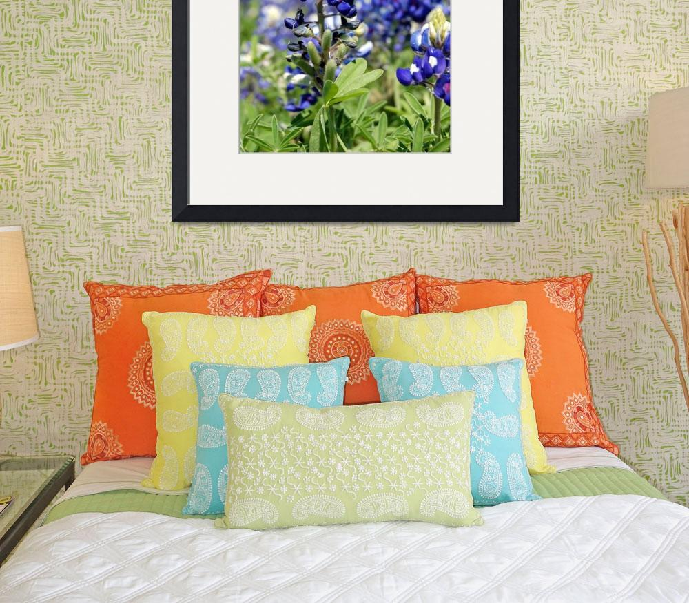 """Bluebonnets in Spring&quot  (2009) by unc98mck"